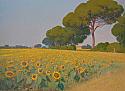 Campo di girasoli in Toscana